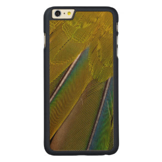 Jenday Conure Feather Design Carved Maple iPhone 6 Plus Case