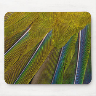 Jenday Conure Feather Design Mouse Pad