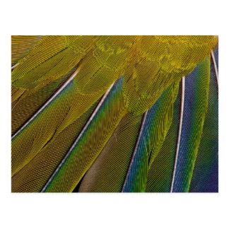 Jenday Conure Feather Design Postcard