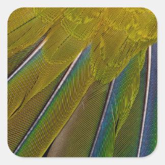 Jenday Conure Feather Design Square Sticker