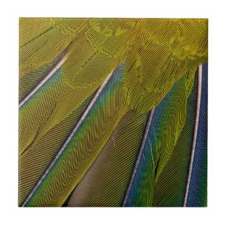 Jenday Conure Feather Design Tile