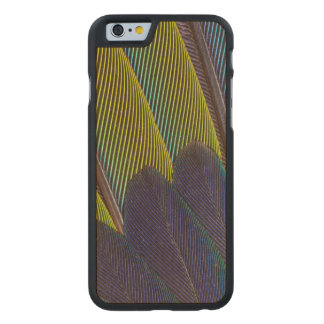 Jenday Conure Feather Detail Carved Maple iPhone 6 Case