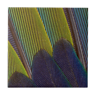 Jenday Conure Feather Detail Tile