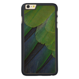 Jenday Conure feathers Carved Maple iPhone 6 Plus Case
