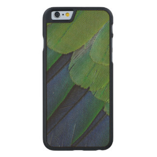 Jenday Conure feathers Carved® Maple iPhone 6 Slim Case