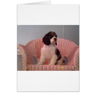 Jenna, Tri american cocker spaniel puppy Greeting Card