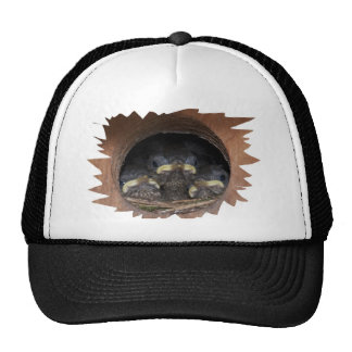 jenny wren chicks trucker hat