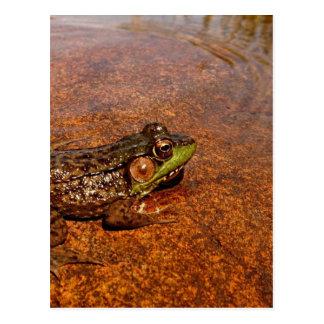Jerimiah was a Bullfrog Postcard