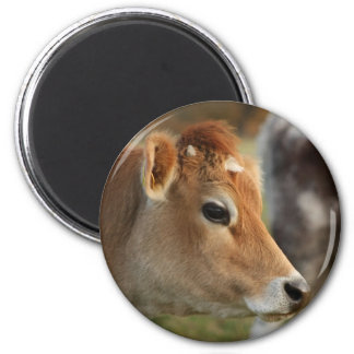 Jersey Cow Magnet