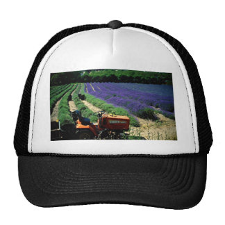 Jersey lavender farm, Jersey Channel Islands, Engl Trucker Hat