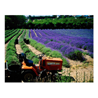 Jersey lavender farm, Jersey Channel Islands, Engl Postcard