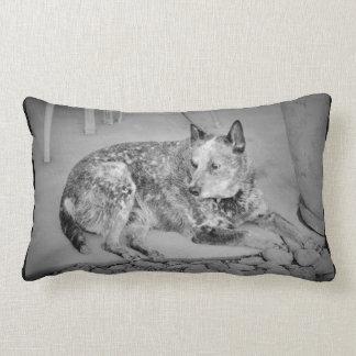 Jessie Blue Heeler Lumbar Accent Pillow