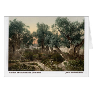 Jesus Walked Here: Garden of Gethsemane Card