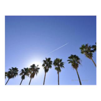 Jet Stream Over Palm trees Postcard