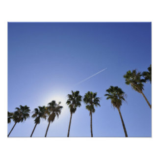 Jet Stream Over Palm trees Poster