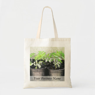 Jeunes plantes de tomate dans des pots de crèche sac en toile budget