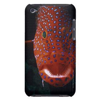 Jewel Grouper, Cephalopholis miniata iPod Case-Mate Case