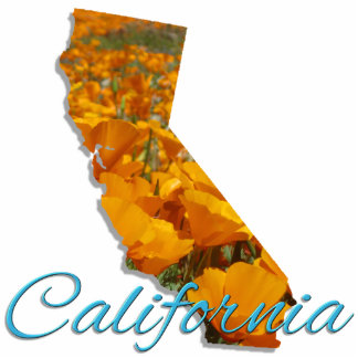 Jewelry - Pin - CALIFORNIA Photo Sculpture Button