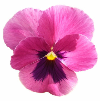 Jewelry - Pin - Dark Pink Pansy Photo Sculpture Button