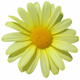 Jewelry - Pin - Yellow Daisy Photo Sculpture Button
