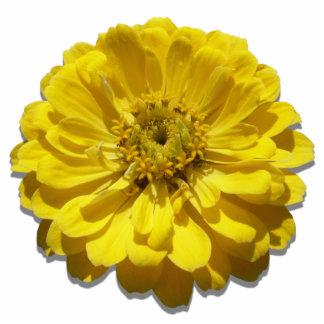 Jewelry - Pin - Yellow Zinnia Photo Sculpture Button