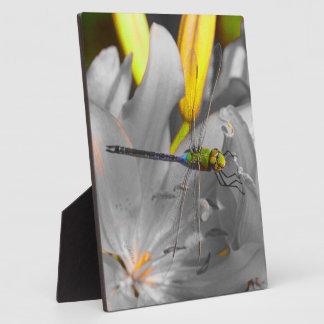 jjhélène Dragonfly original design 8x10 With Easel Photo Plaques