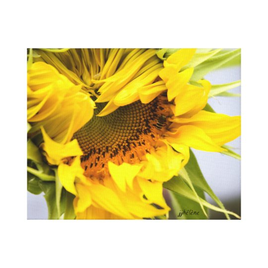 "jjhelene ""Grand Opening"" Sunflower Canvas Wrap"