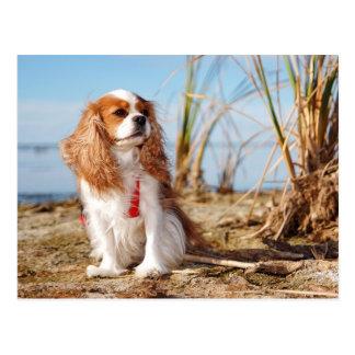 Joey Beach Cavalier Spaniel Postcard