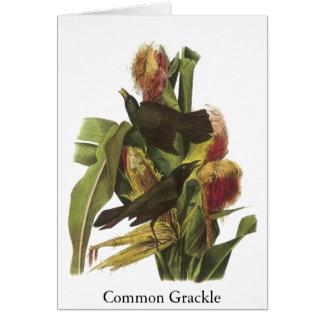 John Audubon Common Grackle Print Card