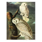 John James Audubon Owls Fine Art Postcard