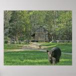 John Oliver Black Bear Cabin Posters