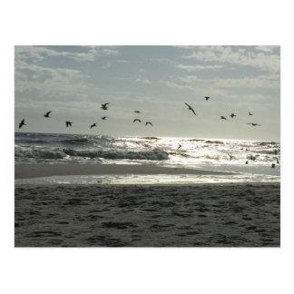 Johnson beach Pensacola Postcard
