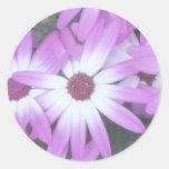 Joints de l'enveloppe de la violette adhésif rond