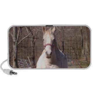Jolis haut-parleurs populaires de cheval