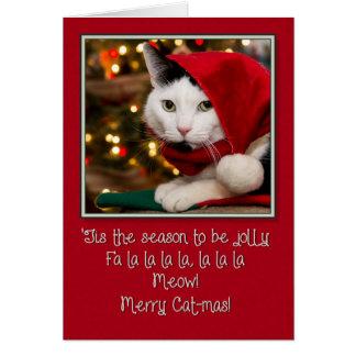 Jolly Cat-mas Card