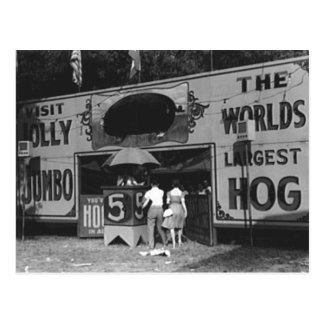Jolly World's Largest Hog Vintage Carnival Photo Postcard