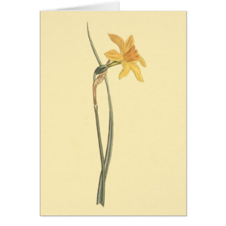 Jonquil Daffodil Yellow Flower Illustration Card