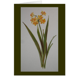 Jonquil sauvage cartes