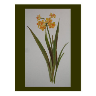 Jonquil sauvage cartes postales