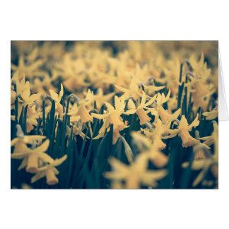 Jonquilles de printemps carte de vœux