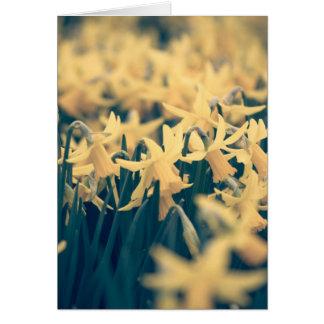 Jonquilles de printemps cartes de vœux