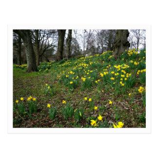 Jonquilles. Jardins de Sophia, Cardiff, Pays de Carte Postale