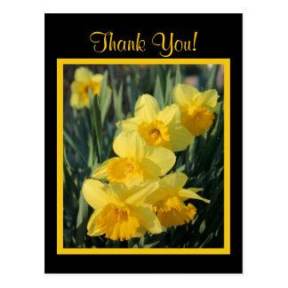 Jonquilles jaunes carte postale