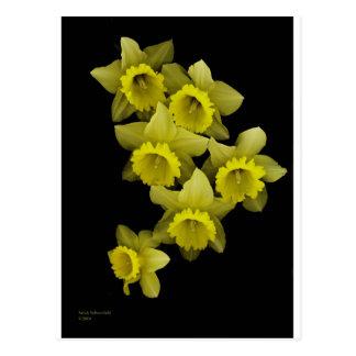 Jonquilles jaunes sur le noir cartes postales