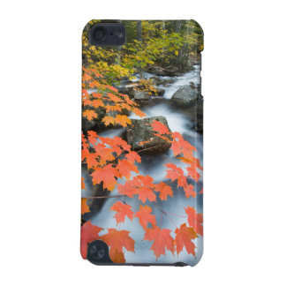 Jordan Stream in fall in Maine's Acadia National iPod Touch 5G Cases