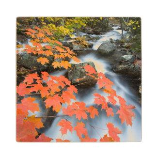 Jordan Stream in fall in Maine's Acadia National Maple Wood Coaster