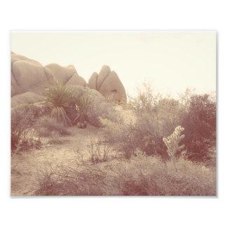 Joshua Tree, Afternoon Photographic Print