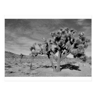 Joshua Tree (black & white) Postcard
