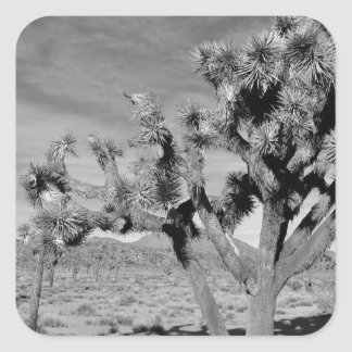 Joshua Tree (black & white) Square Sticker