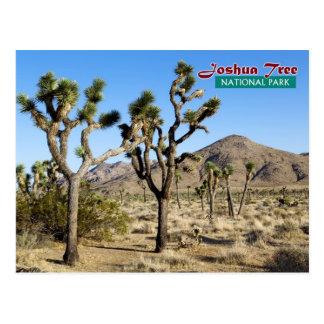 Joshua Tree National Park, California Postcard